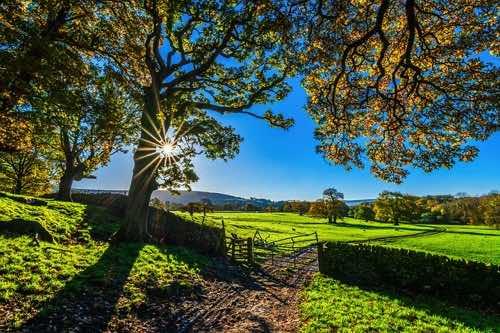 太陽の光が差し込む気持ちの良い農場